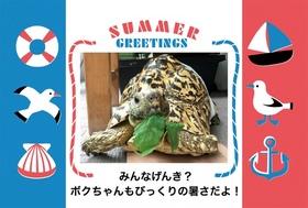 暑中見舞いマルちゃん.jpg